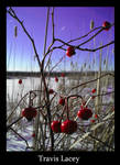 A winters berry? by RavenseyeTravisLacey