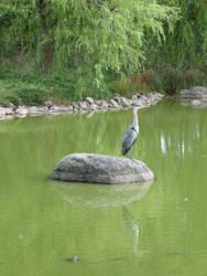 Bird by duokai