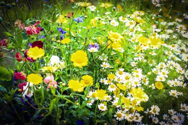 Summer Colours by NurturingNaturesGift
