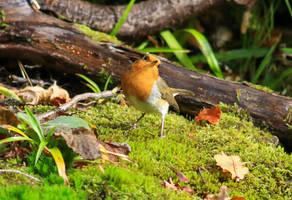Robin by NurturingNaturesGift