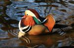Mandarin Duck Male by NurturingNaturesGift