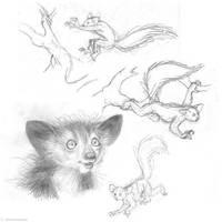 Aye-aye doodles by Henrieke