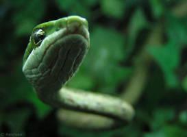 Vine Snake by Henrieke