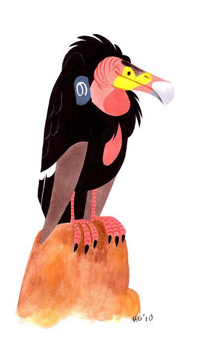 Californian condor by Henrieke