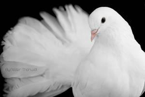 Birdy by nader-tharwat