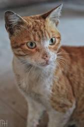 Street Catty Portrait. by nader-tharwat
