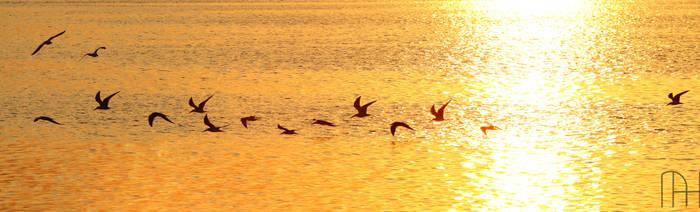 Sunset Birds by nader-tharwat