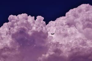 Purple Flight by AthenaIce