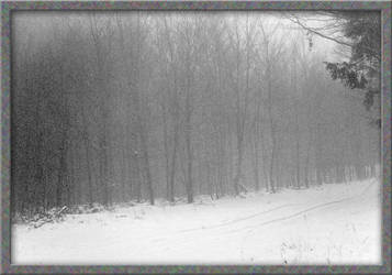 Winter Wood by Hank0r