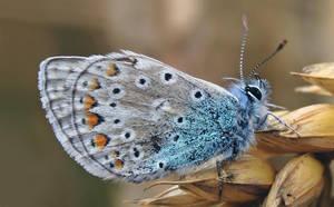 A Butterfly by Slinky-2012