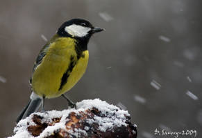 Tit in the snow by Slinky-2012