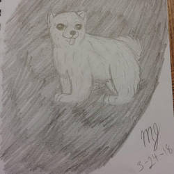 Pomeranian  by SUPERWOLF10