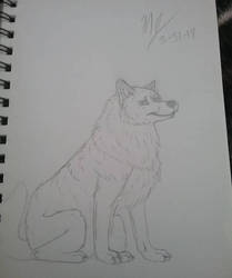 Wolf Sketch  by SUPERWOLF10