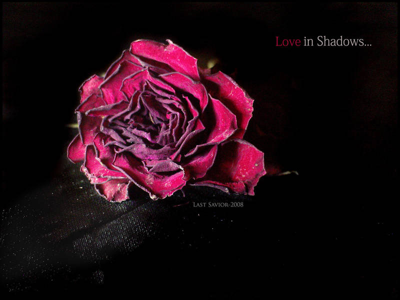 Love in shadows by Last-Savior