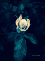 Heaven Rose by Last-Savior
