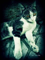 Full Rest Kitty by Last-Savior