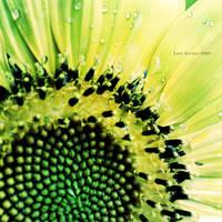 Sun of Garden by Last-Savior