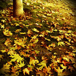 Tree Of Autumn by Last-Savior
