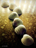 Train Of Shells by Last-Savior