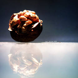 Walnut by Last-Savior