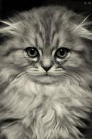 Pretty kitty by zjuzjaka