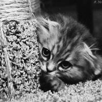 I feel shy.. by zjuzjaka