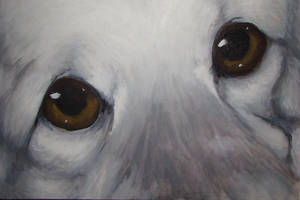 Ace Eyes by Silverishness