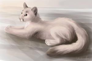 Puma sweet by kotenokgaff