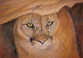 Cougar by kotenokgaff