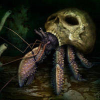 Hermit Crab in Skull ID by hwango