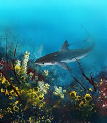 Dreamtime's Hunter - Shark Form by hwango