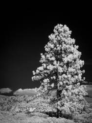 Old Guard in Infrared by eprowe