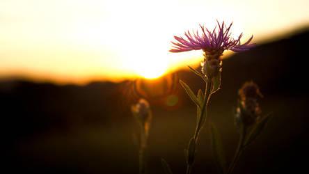 Sunwind by VoidIndex