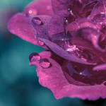 Velvet Drops by VoidIndex