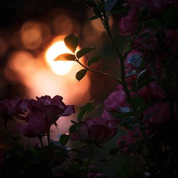 Last Light by VoidIndex