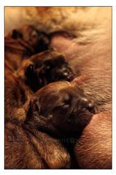 puppy Chow 1 by WeiTat