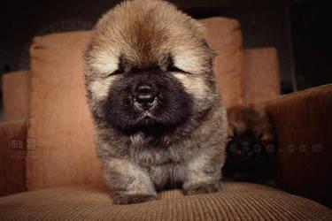 puppy Chow 4 by WeiTat