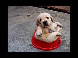 puppy Golden 17 by WeiTat
