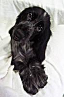 puppy cocker 24 by WeiTat