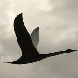 Fly Away 1 by Earth-Hart