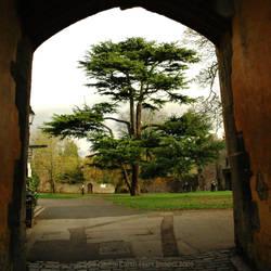 Eye to Cedar by Earth-Hart