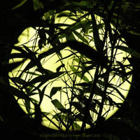 Bamboo Moon by Earth-Hart