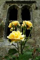 Rose Window by Earth-Hart
