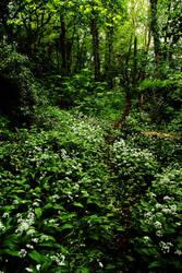 A Walk In the Wyldwood by Earth-Hart