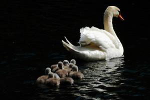 Following Mum by Earth-Hart