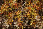 Autumn on the Beech by Earth-Hart