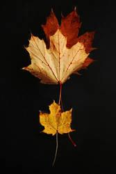 Autumn Trinity by Earth-Hart