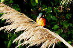 Pampas Queenfisher by Earth-Hart