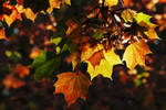 Looking Up To Autumn by Earth-Hart