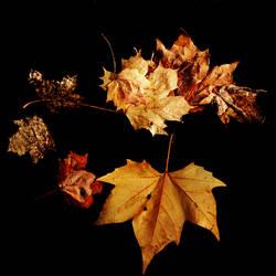 Autumnus Auri by Earth-Hart